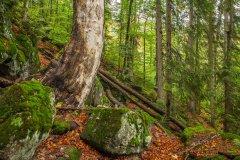 20161007-wilder-wald-rachelseewand-herbst-Rainer_Simonis.jpg